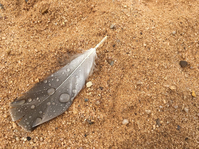 Feder im Sand / Foto: Harmsen